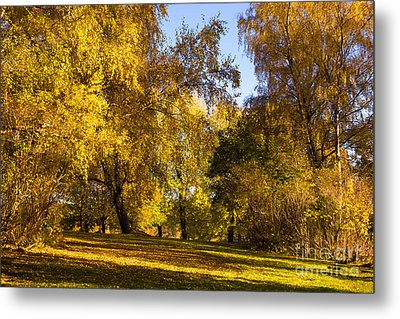 Autumn Sunlight Metal Print by Lutz Baar
