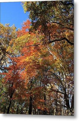 Autumn Trees Metal Print by Frank Romeo
