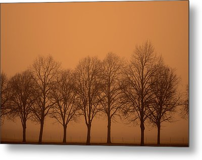 Beautiful Trees In The Fall Metal Print by Toppart Sweden