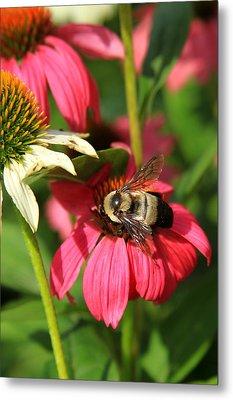 Bee Nice Metal Print by Reid Callaway