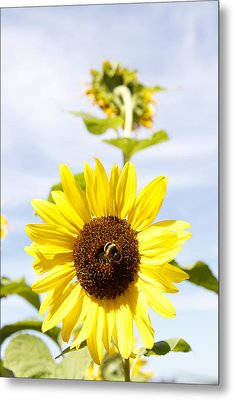 Bee On Flower Metal Print by Les Cunliffe