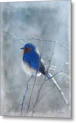 Blue Bird  Metal Print by Fran J Scott
