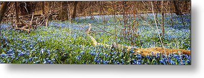 Carpet Of Blue Flowers In Spring Forest Metal Print by Elena Elisseeva