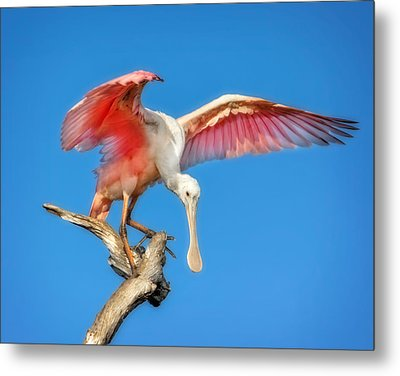 Cleared For Takeoff Metal Print by Mark Andrew Thomas