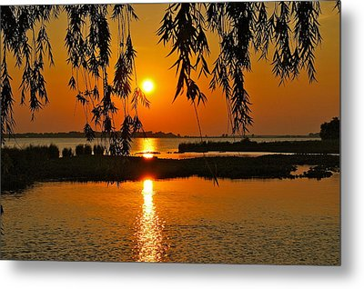 Dancing Light Metal Print by Frozen in Time Fine Art Photography