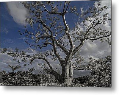 Ghost Tree Metal Print by Debra and Dave Vanderlaan