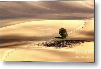 Lonely Tree Metal Print by Jaroslaw Blaminsky