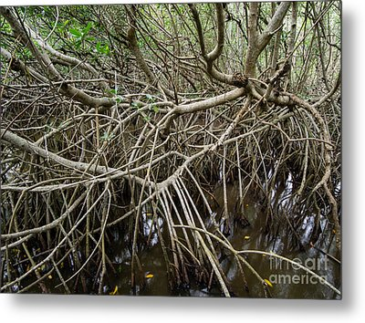 Mangrove Roots Metal Print by Tracy Knauer
