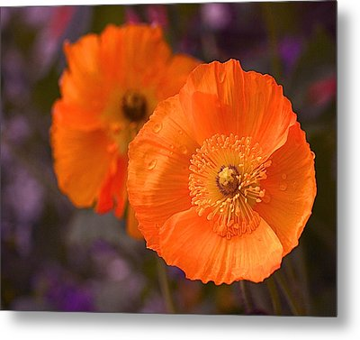 Orange Poppies Metal Print by Rona Black