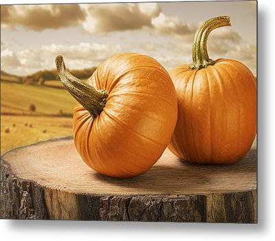 Pumpkins Metal Print by Amanda And Christopher Elwell