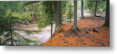 River Flowing Through A Forest Metal Print by Panoramic Images