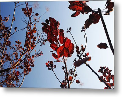Shadows Metal Print by Lucy D