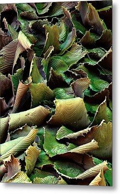 Spanish Moss Leaves Metal Print by Stefan Diller