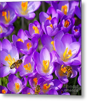 Springtime Metal Print by Angela Doelling AD DESIGN Photo and PhotoArt