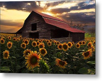 Sunflower Farm Metal Print by Debra and Dave Vanderlaan