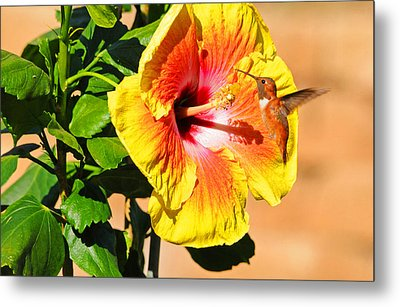 Sunny And Bright Metal Print by Lynn Bauer