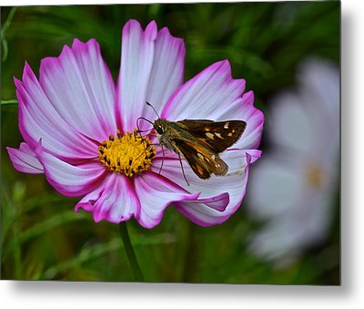 The Beauty Of Nature Metal Print by Frozen in Time Fine Art Photography
