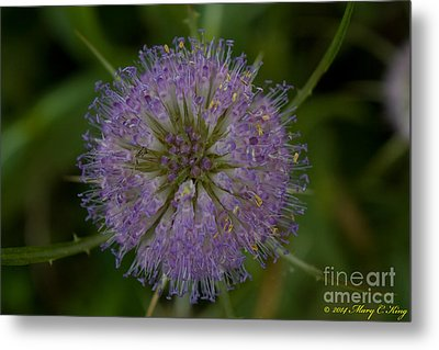 Thistle Pop Metal Print by Mary  King
