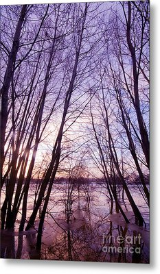 Trees In Water Metal Print by Michal Bednarek