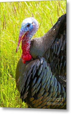 Turkey Metal Print by Graham Foulkes