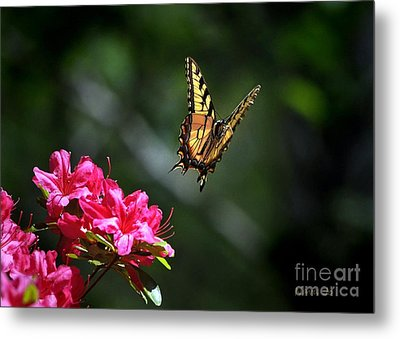 Up And Away Metal Print by Nava Thompson