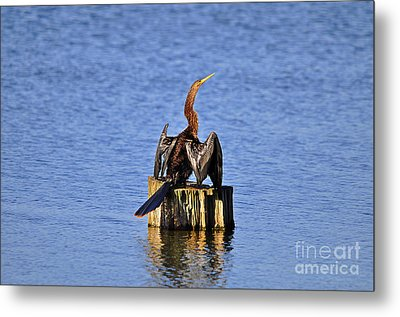 Wet Wings Metal Print by Al Powell Photography USA
