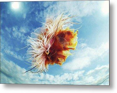 Lion's Mane Jellyfish Metal Print by Alexander Semenov