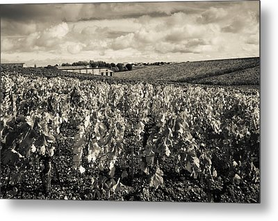 Chateau Lafite Rothschild Vineyards Metal Print by Panoramic Images