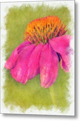 Coneflower Echinacea Metal Print by Robert Jensen