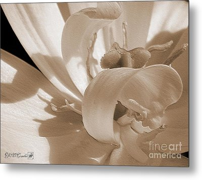 Double Late Tulip Named Angelique Metal Print by J McCombie