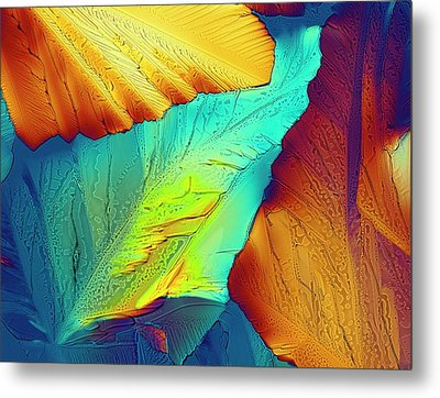 Light Micrograph Of Citric Acid Crystals Metal Print by Alfred Pasieka