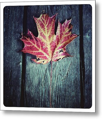 Maple Leaf Metal Print by Natasha Marco