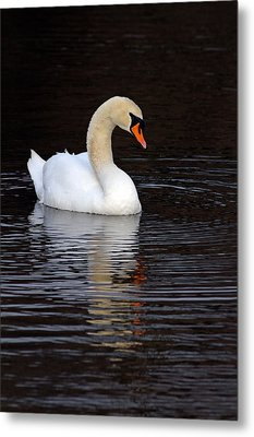 Mute Swan Metal Print by Jim Nelson