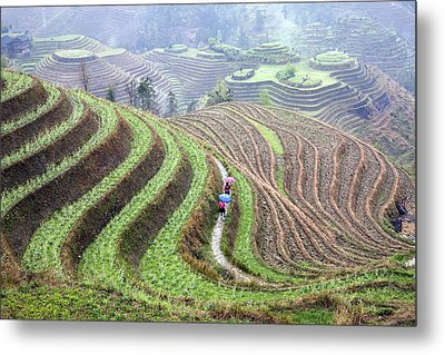 Rice Terraces Metal Print by King Wu