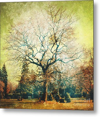 Tree Metal Print by HD Connelly