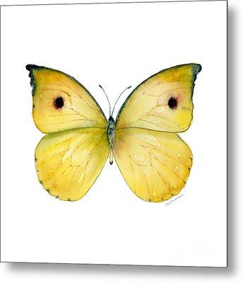 32 Dercas Lycorias Butterfly Metal Print by Amy Kirkpatrick