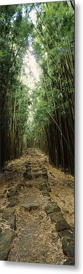 Bamboo Forest, Oheo Gulch, Seven Sacred Metal Print by Panoramic Images