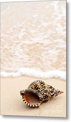 Seashell And Ocean Wave Metal Print by Elena Elisseeva