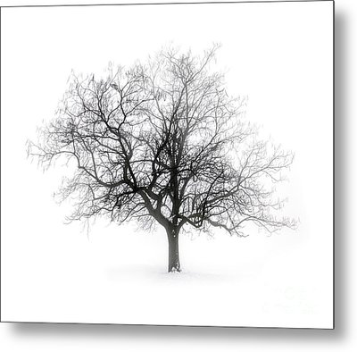 Winter Tree In Fog Metal Print by Elena Elisseeva
