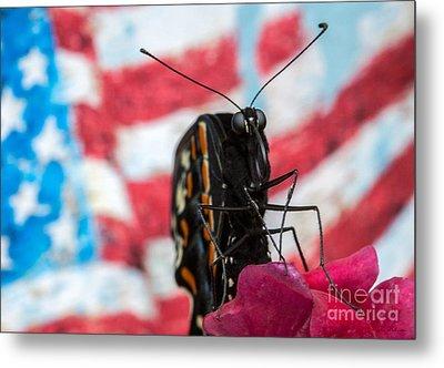 Black Swallowtail Metal Print by Iris Richardson