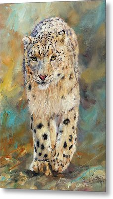 Snow Leopard Metal Print by David Stribbling