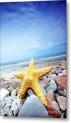 Starfish Metal Print by Michal Bednarek