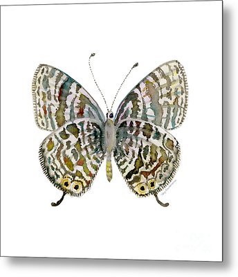 51 Lang's Short-tailed Blue Butterfly Metal Print by Amy Kirkpatrick