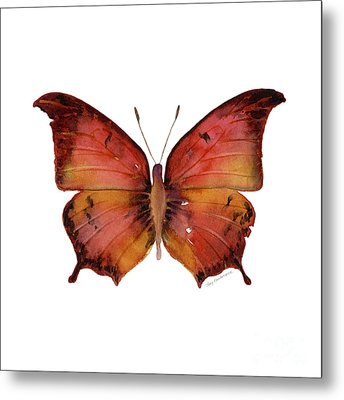 58 Andria Butterfly Metal Print by Amy Kirkpatrick