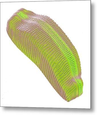 Diatom Metal Print by Steve Gschmeissner