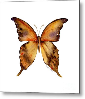 7 Yellow Gorgon Butterfly Metal Print by Amy Kirkpatrick