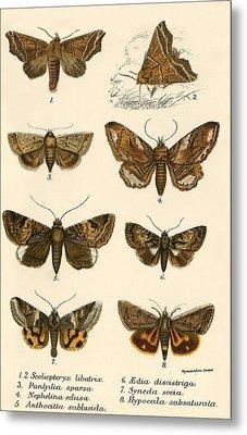 Butterflies Metal Print by English School