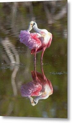 Usa, Florida, Everglades National Park Metal Print by Jaynes Gallery