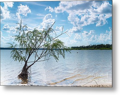 A Baby Willow Tree On A Beach Metal Print by Ellie Teramoto