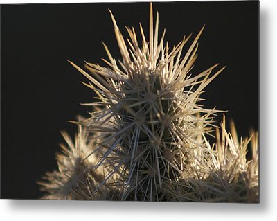A Cholla Cactus I Metal Print by Carolina Liechtenstein